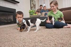 Mohawk SmartStrand Stain Resistant Carpet