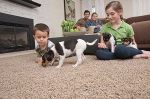 mohawk smartstrand pet friendly